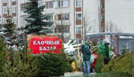 16 елочных базаров откроются в Ессентуках