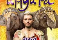 Мировое шоу слонов в кисловодском цирке