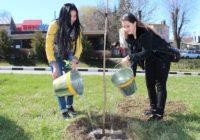 На аллеях Славы к весне планируется высадить 200 деревьев