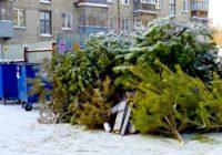 В Ессентуках растёт спрос на подержанные новогодние елки