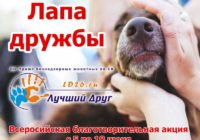 Приютам для животных можно помочь кормом и лекарствами