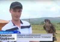 На Ставрополье хищные птицы взяли под охрану элеватор и ферму