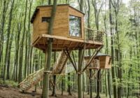 В Железноводске планируют построить экоотель на деревьях