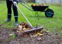 Что делать с опавшей листвой и ветками