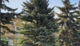 Голубые ели высаживают в Пятигорске в сквере имени Льва Толстого