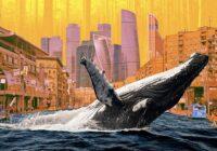 Объясняем на китах: сколько стоит природный капитал