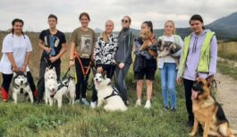В Пятигорске организованы занятия по гонкам на собачьих упряжках